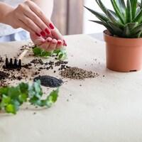 Mains d'une femme en train de jardiner.
