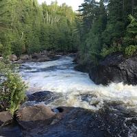 Paysage d'une rivière qui coule dans une forêt