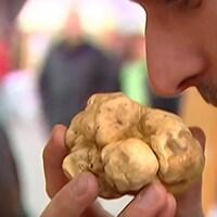 Un acheteur potentiel renifle une truffe blanche d'Alba.
