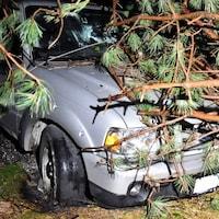 Une voiture endommagée par les branches d'un arbre. Une ligne électrique repose sur la partie avant du véhicule.