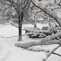 Un arbre avec de la neige à Rouyn-Noranda et la rue enneigée à la suite d'une tempête