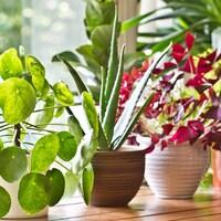 Différentes plantes dans des pots sur le bord d'une fenêtre.