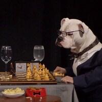 Ils jouent aux échecs et portent des lunettes.