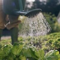 Un jardinier arrose ses plantes.