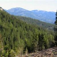 Nouveau mode de gestion de la forêt au Québec