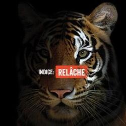 Un tigre superbe