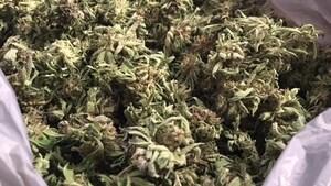 Cannabis: des changements réclamés dans les hôpitaux et foyers de l'Î.-P.-É.