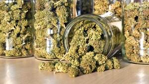 Qui sont les plus importants consommateurs de cannabis au pays?
