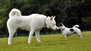 Après les débats, enfin un parc canin à Rivière-du-Loup?