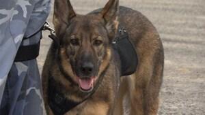 Une entreprise de chiens pisteurs fondée par des Bas-Laurentiens