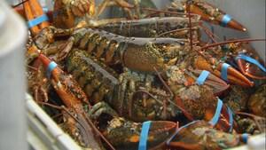 Réaction des pêcheurs de homard face à la fermeture hâtive de la saison