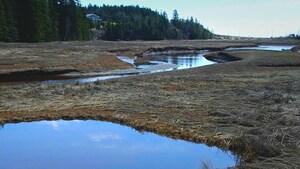 Le grand potentiel du «carbone bleu» de la baie de Fundy