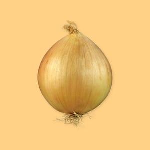 Oignon - Ingrédients - Mordu