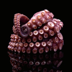 Une tentacule de pieuvre enroulée sur elle-même.