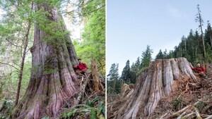 Montage de deux photos, l'une montrant TJ Watt appuyé sur un grand arbre, l'autre sur sa souche.