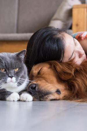 Une femme dort sur un chien à côté d'un chat.