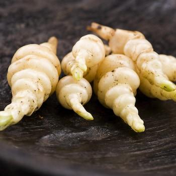 Des racines de crosne du Japon avec leurs petits bourrelets caractéristiques, dans un bol.