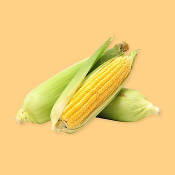 Trois épis de maïs sur un fond jaune.