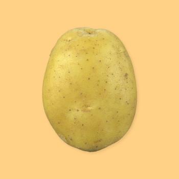 Une pomme de terre sur un fond jaune.