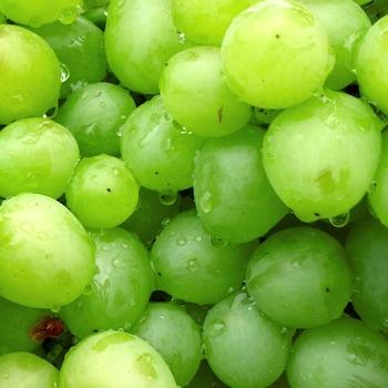Zoom sur plusieurs raisins verts.