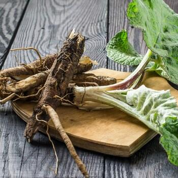 Les racines, les tiges et les feuilles de bardane sur un comptoir.