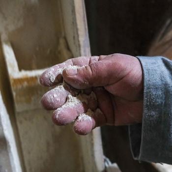 De la farine dans la main d'un meunier.