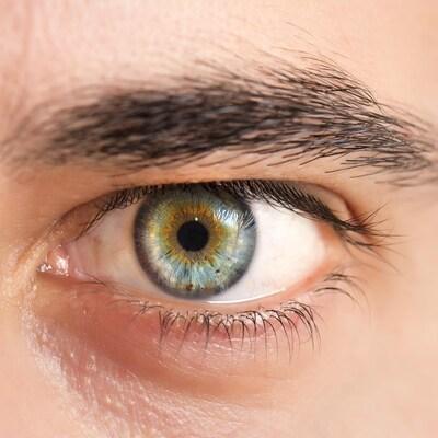 L'œil humain mieux compris