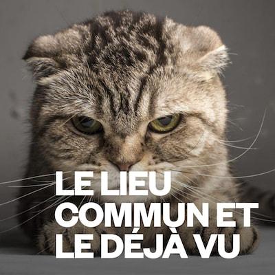 L'épisode Les chats de la grande série Le lieu commun et le déjà vu.