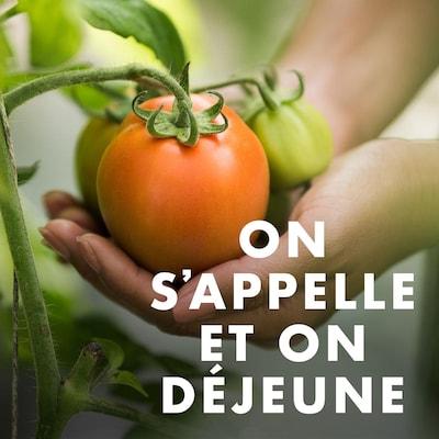 Des mains qui tiennent des tomates sur un plant, avec le titre «On s'appelle et on déjeune».