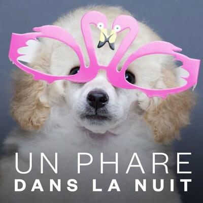 Un chiot porte des drôles de lunettes.