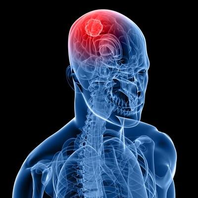 Une représentation artistique d'une zone du cerveau
