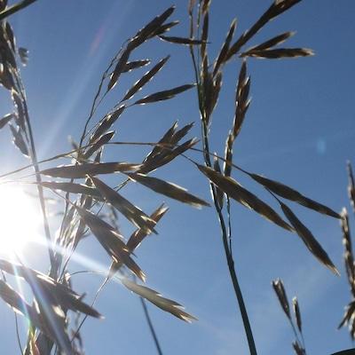 Un champ en Alberta. Les cultivateurs albertains attendent avec impatience de pouvoir ensemencer leurs champs.