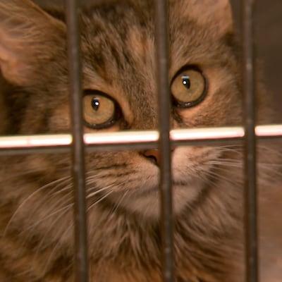 Un chat dans une cage.
