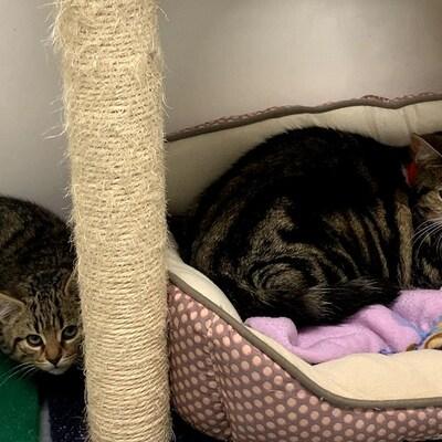 Deux chats sont couchés dans un arbre à chat.