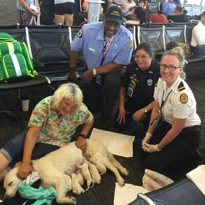 Quatre personnes posent aux cotés d'une chienne en train d'allaiter ses chiots, en plein milieu d'un aéroport