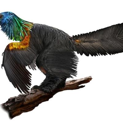 Un dinosaure au plumage arc-en-ciel
