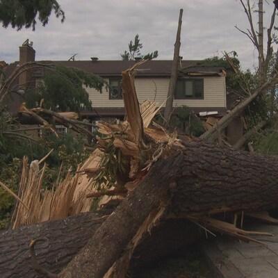 un arbre tombé devant une maison.