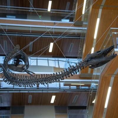 Squelette d'elasmosaure suspendu au plafond d'un atrium au centre d'un édifice à plusieurs étages.