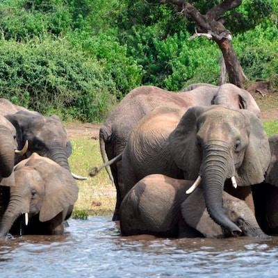 Un groupe d'éléphants.