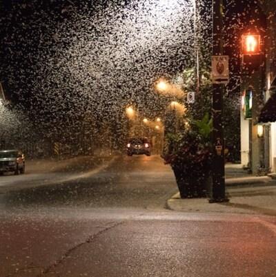 Un lampadaire éclaire un essaim d'éphémères.