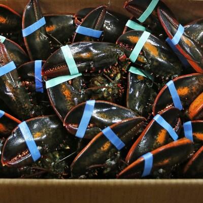 Des homards vivants dans une boîte de carton.
