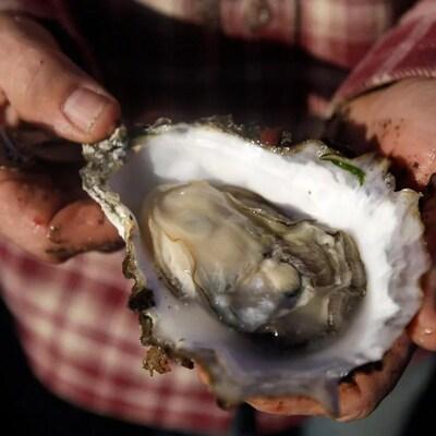 Des mains tendent une huître ouverte