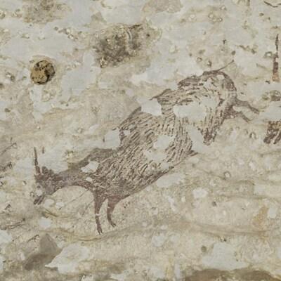 Photo montrant un mammifère préhistorique dessiné dans une grotte d'Indonésie.