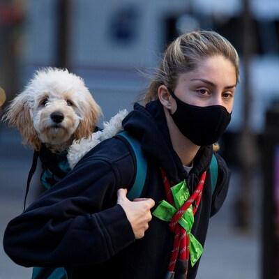 Une femme masquée porte un petit chien dans son sac à dos.