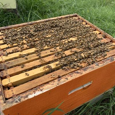 Gros plan sur une ruche en bois et des abeilles qui se promènent à la surface.