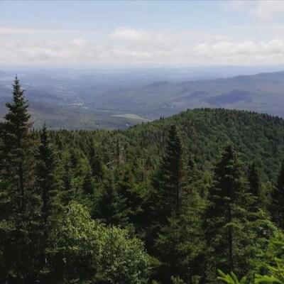 La Réserve naturelle des Montagnes-Vertes.