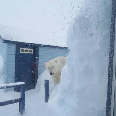 Photo d'un ours polaire prise de la fenêtre d'un chalet.
