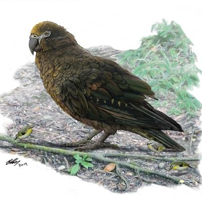 Un dessin du perroquet.