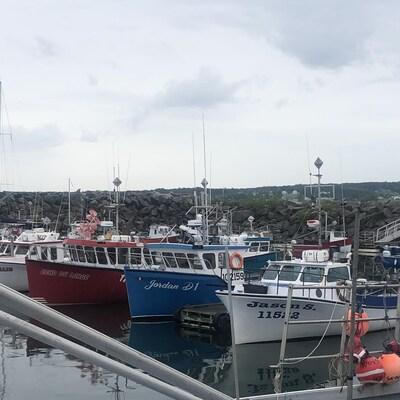 Des bateaux de pêche accostés dans le port de Grande-Rivière.