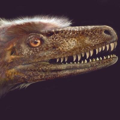 Reconstitution de l'apparence de la tête du Saurornitholestes langstoni.